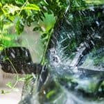 Removing Tree Sap from Your Car